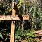 Adventure Log: Steam Donkey Trail, Olympic Peninsula