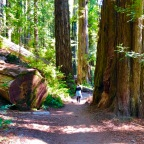 Our Rogue Trip: Best of Coastal, Redwoods & Crater Lake Highways