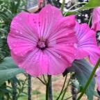 Flora & Fauna Friday
