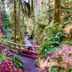 Adventure Log: Quinault Rain Forest